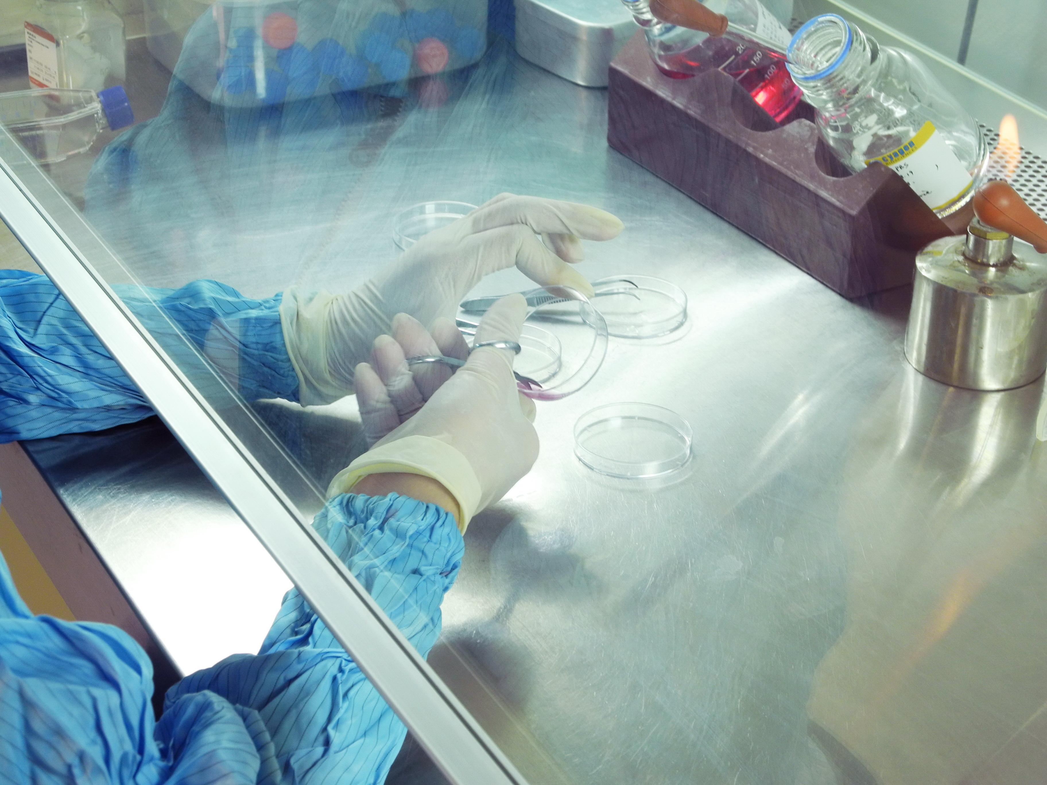 干细胞研发实验图1